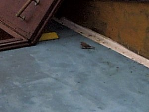 A small sparrow joined us for about 8 hours on our_  cruise.